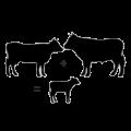 Koe + Stier = Kalf